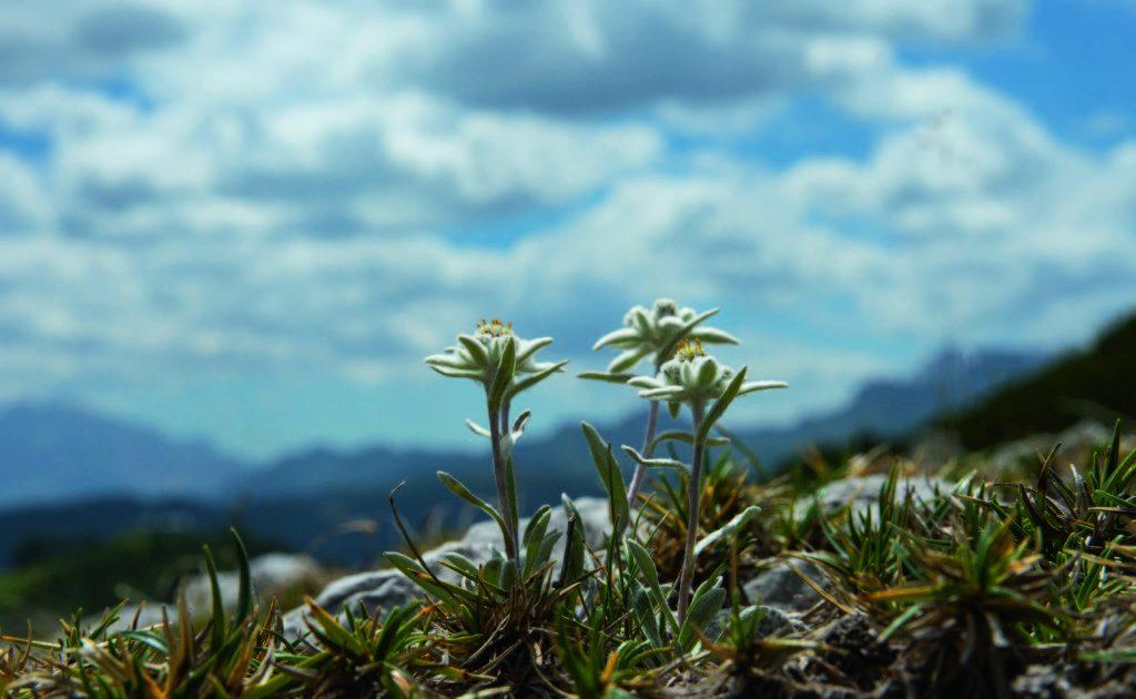 Alpen- en Dolomietenreis