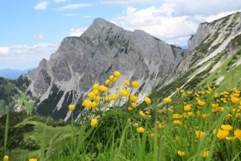 Botanische reis naar Tannheim