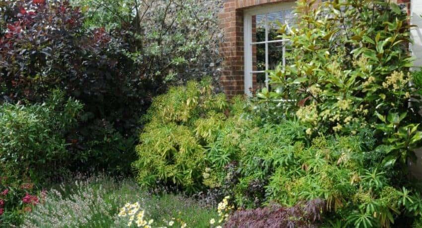 Colemore Gardens