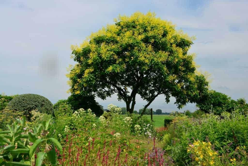 De mooiste Piet Oudolf tuinen ter wereld